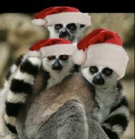 Christmas Lemurs